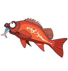 Cartoon red grouper fish eating vector
