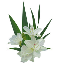 white lily bouquet flowers isolated vector image vector image