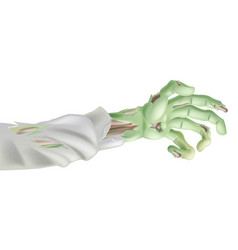 Halloween zombie arm vector