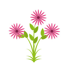 daisy flowers bunch flora vector image vector image
