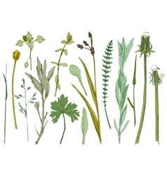 Hand drawn set of herbs vector image vector image