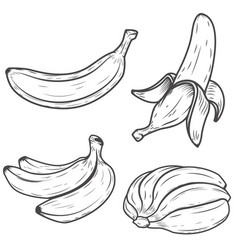 Set of banana icons isolated on white background vector