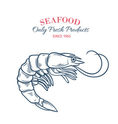 hand drawn shrimp icon vector image vector image