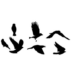 Black silhouette of bird flying vector