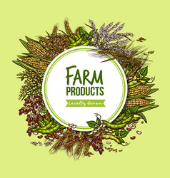 cereal vegetable and bean farm product poster vector image vector image