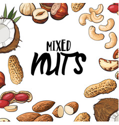 Square banner of various nuts with round place for vector