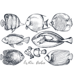 Collection of hand drawn exotic fishes vector