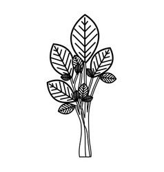 Sketch silhouette tree plant with few leaves vector