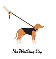 Beagle Dog with a leash - color serious dog vector image