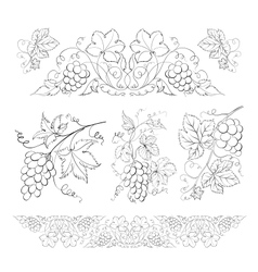 Hand drawn of pencil grapes set vector image vector image