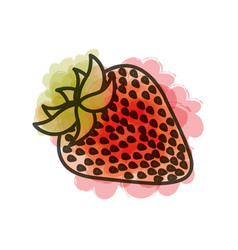 Watercolor drawing of strawberry fruit vector