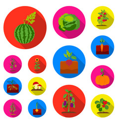 Plant vegetable flat icons in set collection for vector