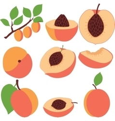 Peach set peaches pieces and slices vector