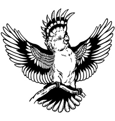 Cockatoo black white vector