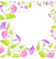 Flowers frame of bindweed vector