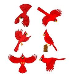 Cardinal cartoon set vector