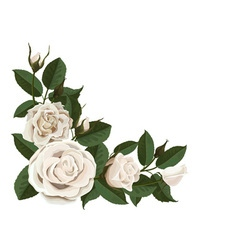 White rose buds and green leaves in the corner vector image vector image