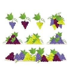 Collection of grapes sorts fruit for wine making vector