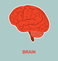 Human brain anatomy vector