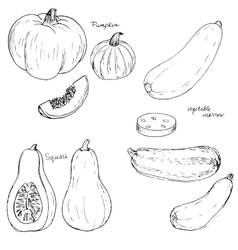 Hand drawn vegetables vector
