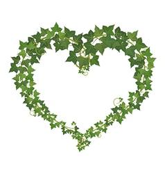 Ivy heart vector image