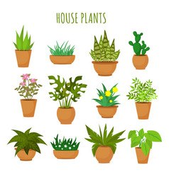 Indoor house green plants and flowers isolated on vector