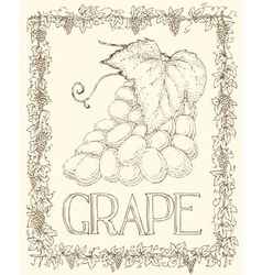 Grape and leaves vector