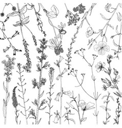 background with ink drawing herbs and flowers vector image