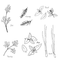 Hand drawn spice herbs vector