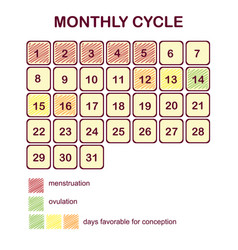 The monthly cycle of a woman vector