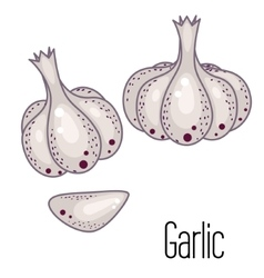 Garlic clove vector