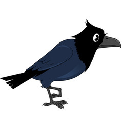 Crow vector