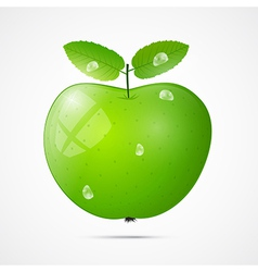 Fresh Green Apple with Water Drops vector image