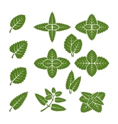 Mint leaves set vector