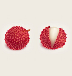 Ripe fresh litchi fruits realistic isolated vector