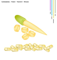 Baby corn with vitamin b and minerals vector