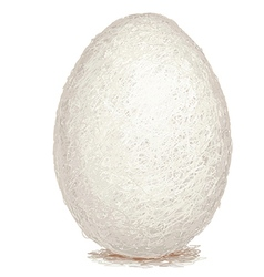 Closeup of a raw white chicken egg isolated vector