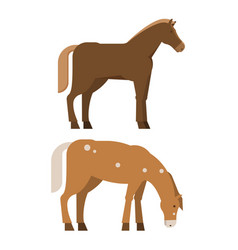 chestnut horses in different poses vector image