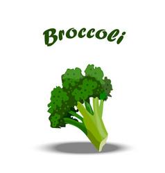 fresh healthy broccoli vector image