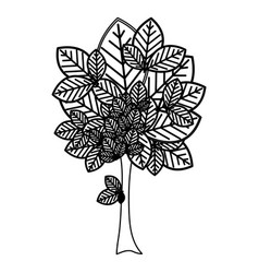 Sketch silhouette leafy tree plant with large vector