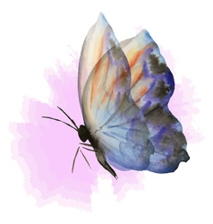 blue butterfly on pink vector image