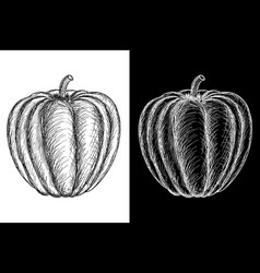 pumpkin hand drawn sketch vector image