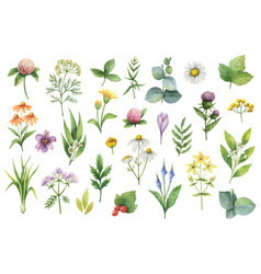 Hand drawn watercolor set of herbs and vector