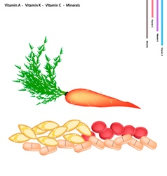 Carrot with vitamin a k c and minerals vector