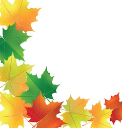 autumn leaves on the white background vector image vector image