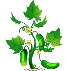 cucumber in the garden vector image vector image