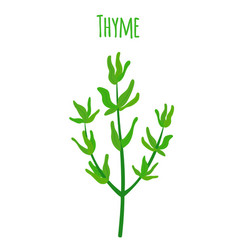 thyme organic spice cartoon flat style vector image