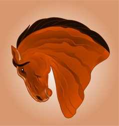 The head of light brown stallion horse vector