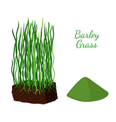barley grass wheat cartoon flat style vector image