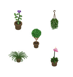 Isometric houseplant set of tree flower blossom vector